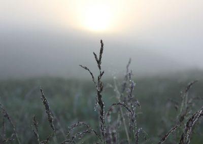 Hammerfest- Soraya11