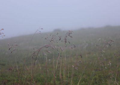 Hammerfest- Soraya9